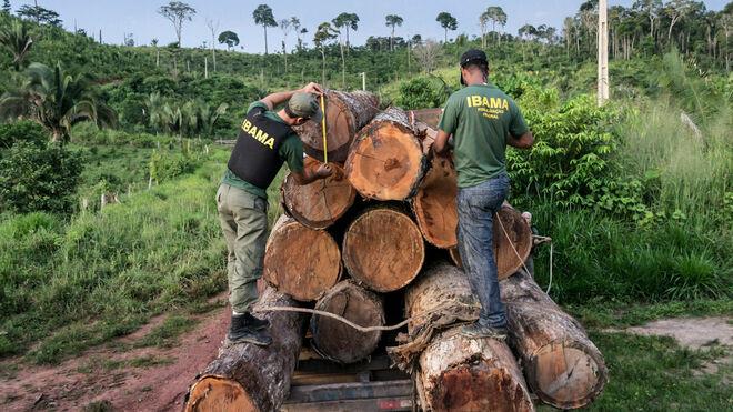 Deforestacion-Amazonia_2124397589_13624919_660x371