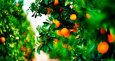 naranjasdehuerto25