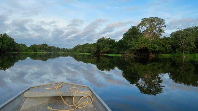 Claves teológicas para el Sínodo de la Amazonía