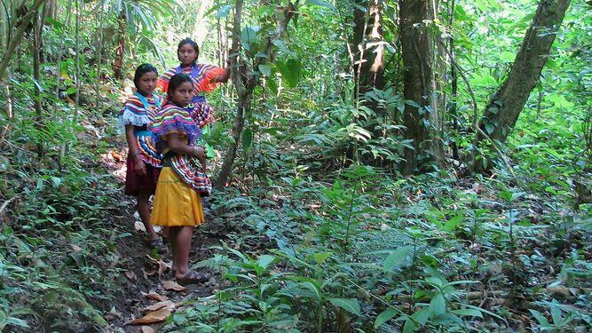 """Cuidemos """"nuestra propia Amazonia"""": Obispos de México"""