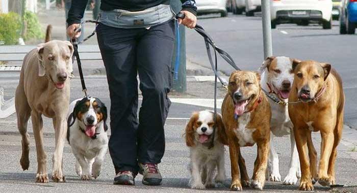 pasear-perros-y-salud-fisica