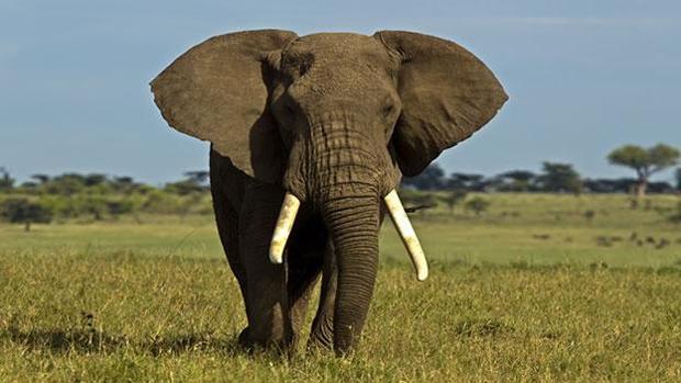 elefantes-k9xG--620x349@abc