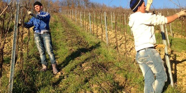 vineyard-1870435__480-642x321