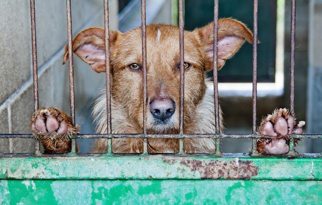 12-10_dia-de-los-derechos-de-los-animales_enjaulado_m