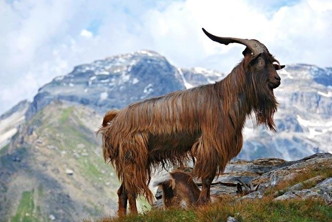 Montañas biodiversidad