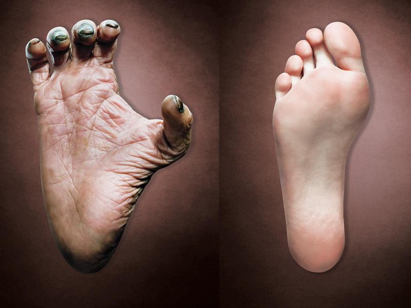 evolucion-del-dedo-gordo-del-pie-humano