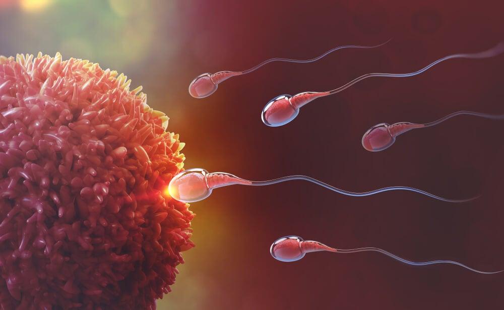 fecundacion-espermatozoides-ovulo