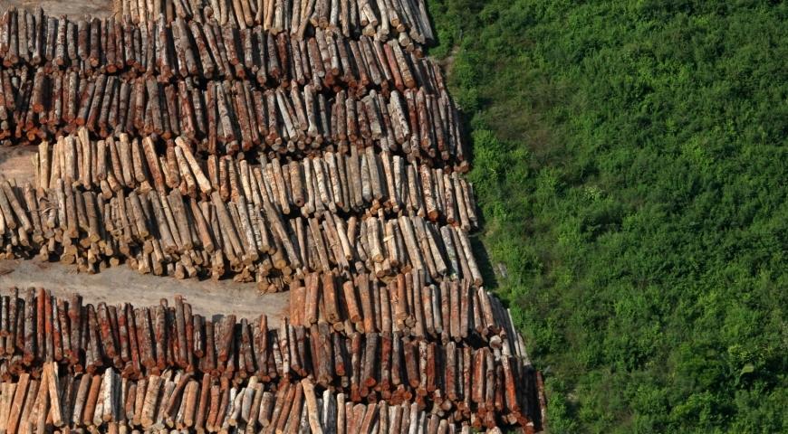 Deforestación ilegal en la Amazonía